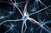 Qu'est ce que la Mémoire Cellulaire ?