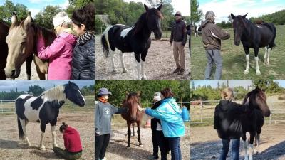 Apprivoisez vos émotions grâce à la puissance et la sagesse ds chevaux