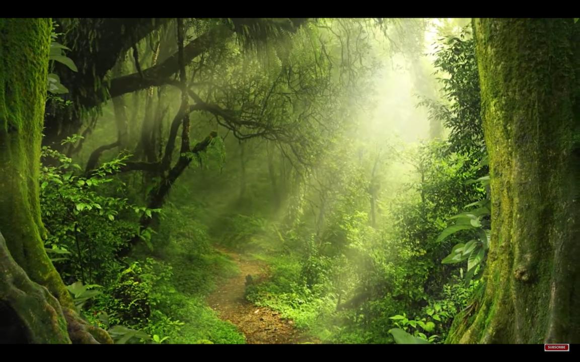 Transformez votre vie et revenez sur votre vrai chemin !